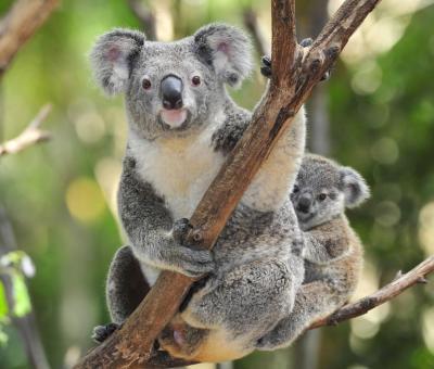Az ausztrál őslakosok a kontinens állatairól nevezték el a jegyeket