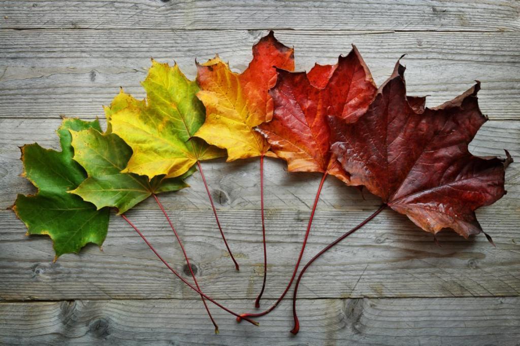 Az évszak, amiben születtünk, meghatározza a karakterünket!