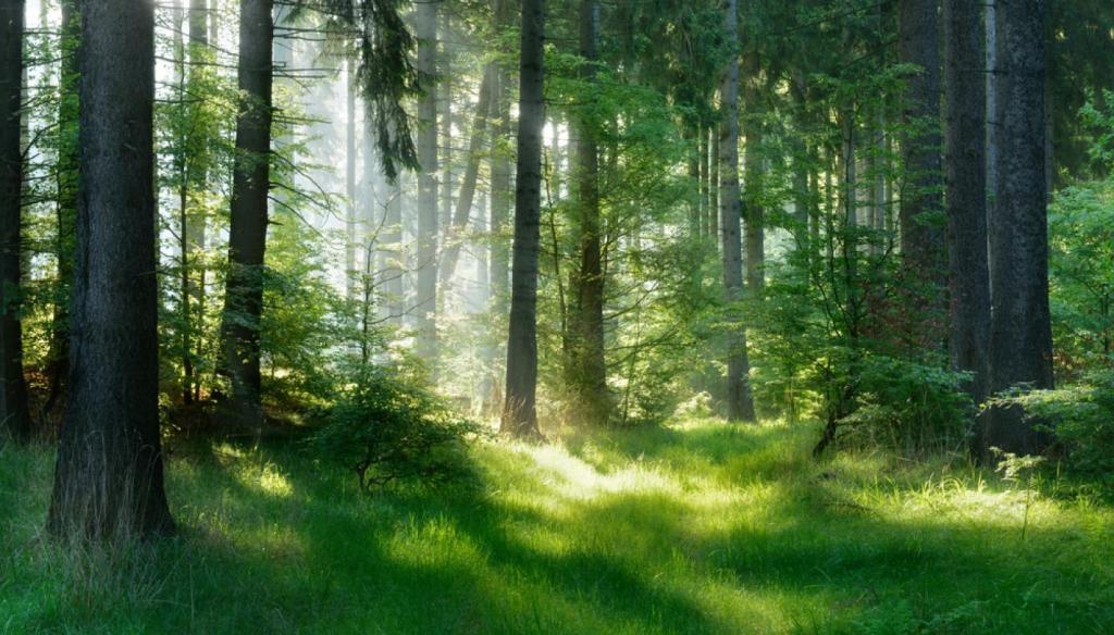 A Bika számára nagyon fontos a harmónia, a természet, a stabilitás