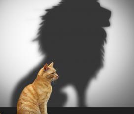 Amikor az önbizalom túl sok, vagy éppen túl kevés...