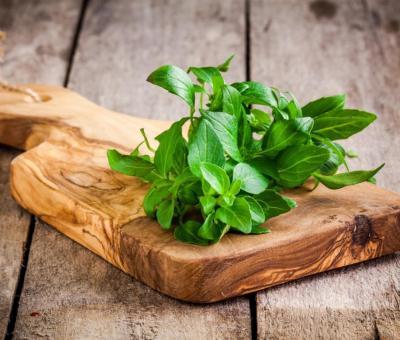A bazsalikom gyógynövényként is használható!