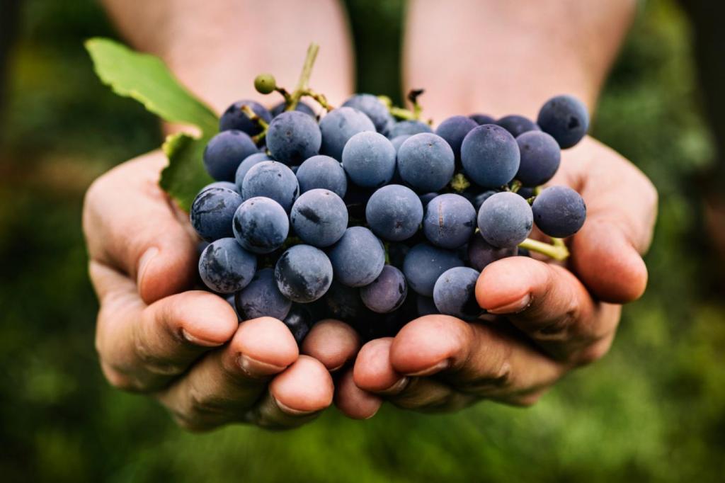 A szőlő erősíti a szívet!