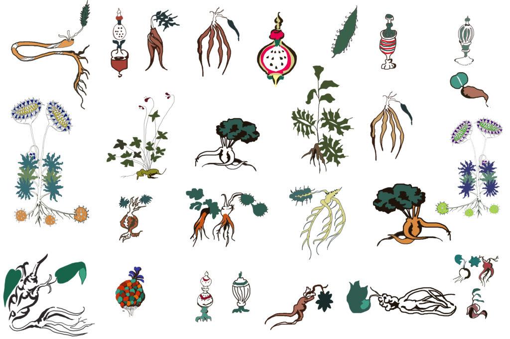 A Voynich-kéziratot furcsa illusztrációk díszítik